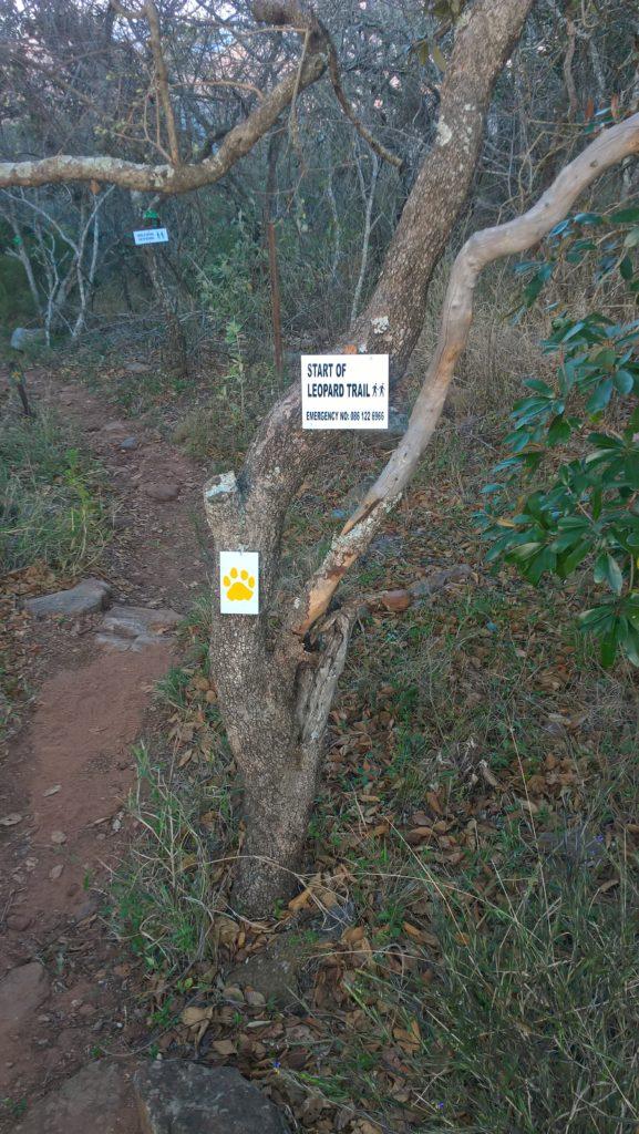 Gelbe Pfoten markieren den Leopard Trail
