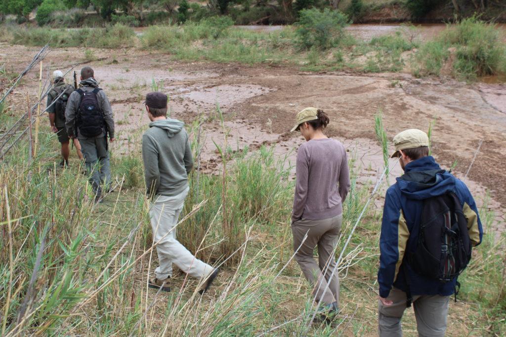 im Gänsemarsch hinter dem Guide während der Walking-Safari in Südafrika