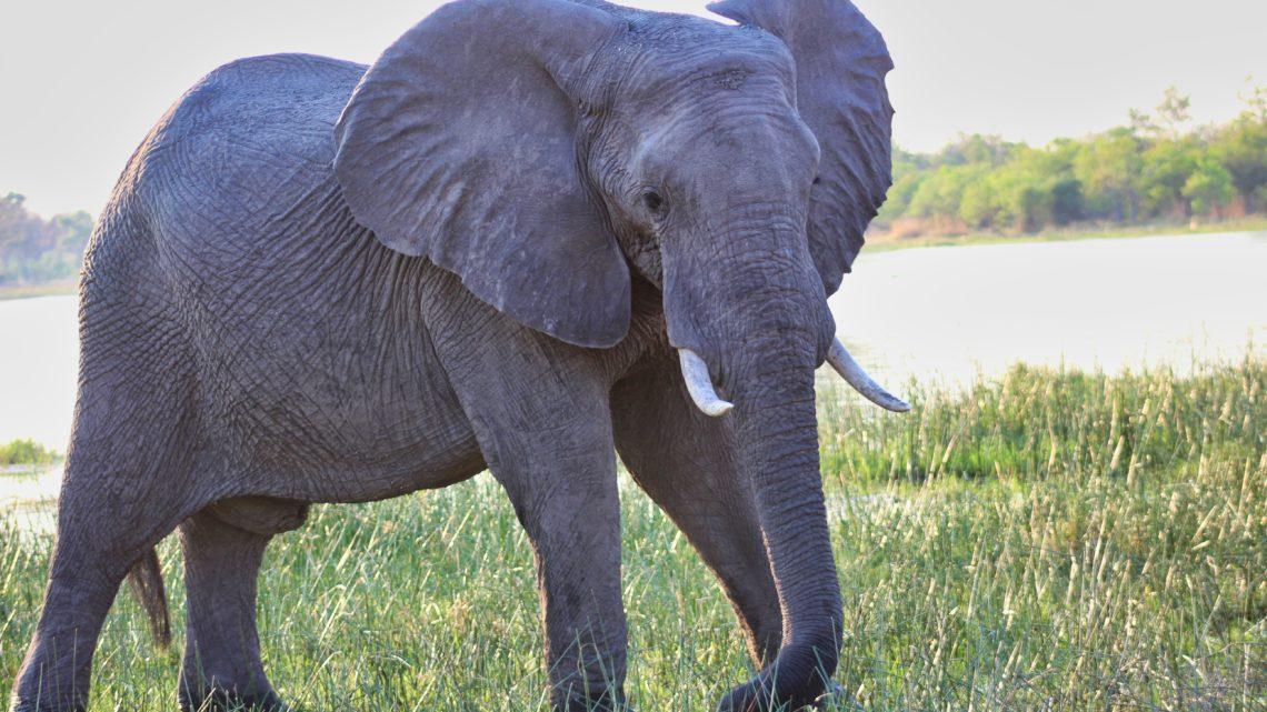 Moremi Game Reserve – Ein Tierparadies