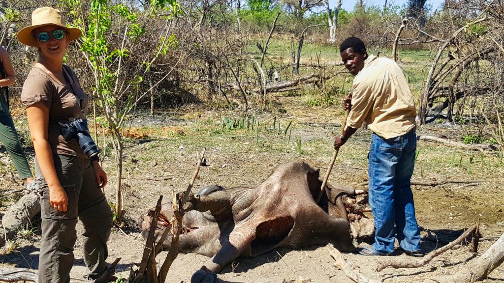 Toter Büffel