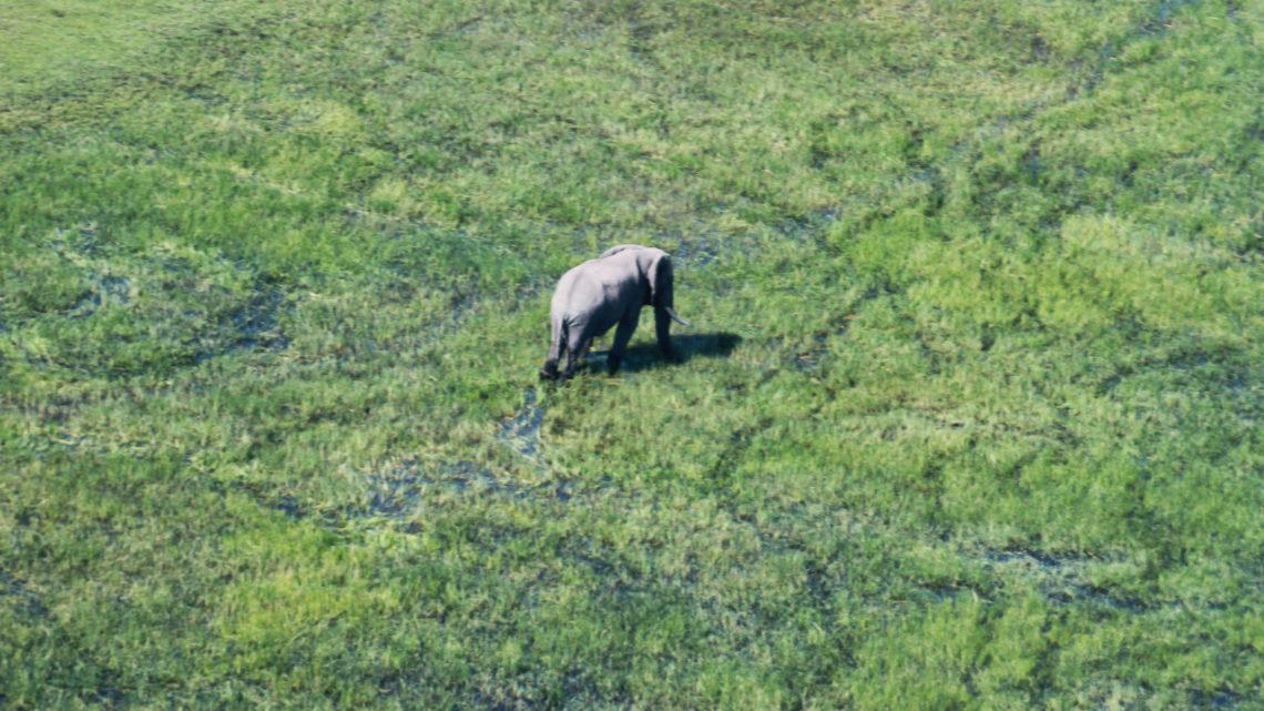 Wunderschönes, wildes Okavango Delta
