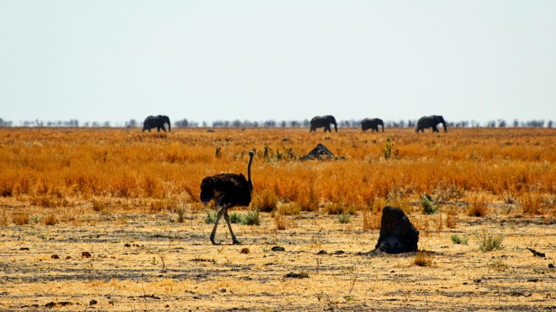 Savuti – Campen in der Wildnis