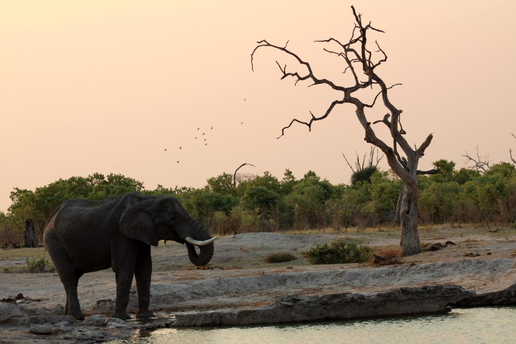 Elefant an Wasserloch in Savuti
