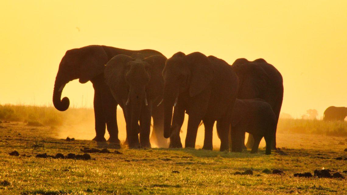 Meine Sehnsucht nach Afrika