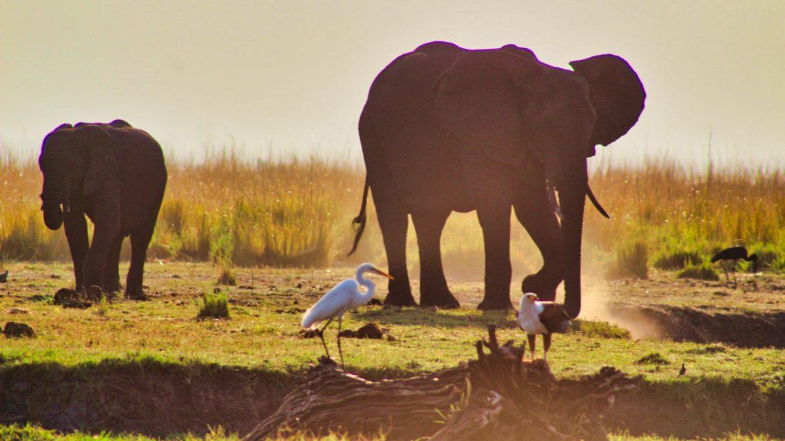 Meine Reise zu dem Ort meiner Sehnsucht – Teil 3 : Unterwegs auf dem überfüllten Chobe River