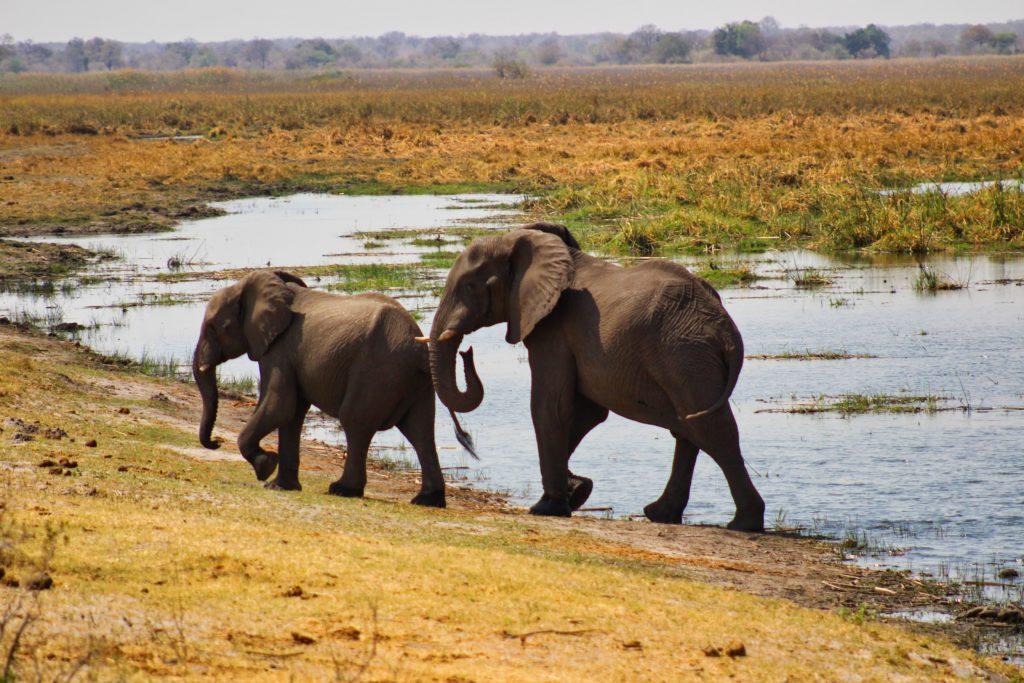 Susuwe Elefanten